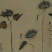 Botanical 07-08, 2007, photogenic drawing