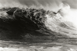 Anthony Friedkin, Palomino Wave