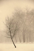 Winter, Sepia toned gelatin silver print, 7 x 5 inches