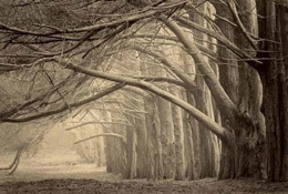 Evening Shade, Sepia toned gelatin silver print, 5 x 7 inches