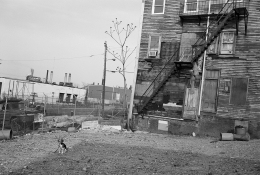 Beagle Tied in Vacant Lot, South Boston, Massachusetts, 1983