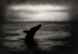 Rocky Schenk Leviathan, 2000, gelatin silver print