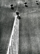 Mario Giacomelli, untitled, from the series On Being Aware of Nature