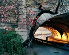Len Jenshel, Riverside Park, (Manhattan), 2001