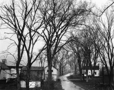 Elms and Road in Rail, Halcott Road, 1974