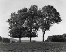 Wayne Gudmundson, Trees of Burgundy #13