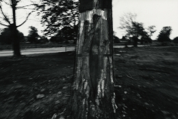 Tree, Rochester, 1973