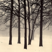 Palos Park, Sepia toned gelatin silver print, 7 x 7 inches