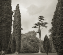Trees, Blenheim Palace, from the series In the Garden