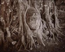 Entwined Buddha, Ayutthaya, Thailand, 1988,