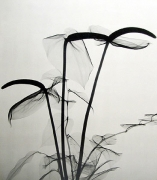 X-Ray of Anthuriums