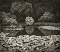 Lily Pond, Biddulph Grange, from the series In the Garden