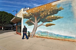 Man and Tree, Los Angeles, California, 2010