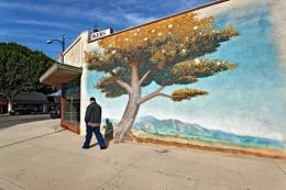 Man and Tree, Los Angeles, California, 2010