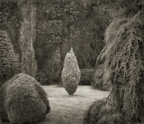 Clearing, Wakehurst Place, from the series In the Garden, 2004