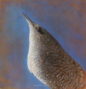 Canyon Wren, hand-colored gelatin silver print, 32 x 32 inches
