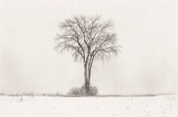 American Elm, Winter, 1994