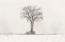 American Elm, Winter, 1994