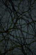 Dusk #55, 2005