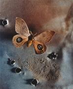Saturniid, Bullet Hole Moth, 2000