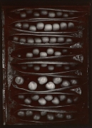 Pods of Chance, 1977, From Ephemera Portfolio, Toned gelatin silver print, 7 1/4 x 5 1/4 inches