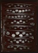 Pods of Chance, 1977, From Ephemera Portfolio, Toned gelatin silver print, 7 1/4 x 5 1/4 inches