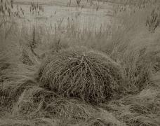 Dried Grass, Chesapeake, VA