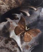 Saturniid Underleaf, 2000