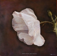 Arizona Prickly Poppy, hand-colored gelatin silver print