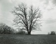Rhondal Mckinney Untitled, Illinois Landscape