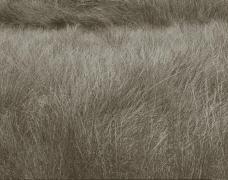 Summer Grass, Lozere, France, 1996