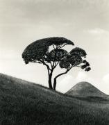 Tree and Mountain, Suisenji Jojuen Garden, Kumamoto, Japan, 2002