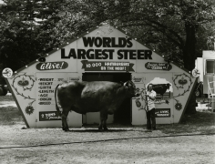 World's Largest Steer, Saratoga Springs, New York, 1974, vintage gelatin silver print