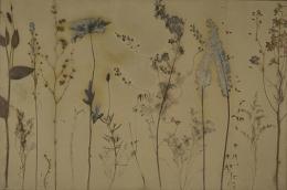Botanical 07-01, 2007, photogenic drawing, 24 x 36 inches