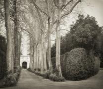 Allée Boboli Gardens, from the series In the Garden