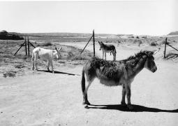 Monument Valley, Arizona-Utah, 1989