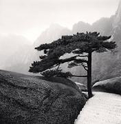 Huangshan Mountains, Study 18, Anhui, China, 2009