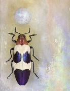 Chrysochroa bugueti rugicollio, 2008