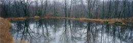 Pond, woods, Ulster County, N.Y.S.