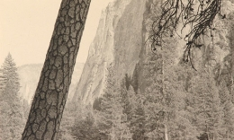 Tree, Yosemite Valley, 2001