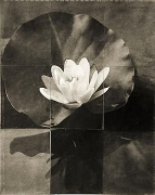 "Waterlily, from the series ""Reconstructions,""platinum palladium print on handmade Japanese gampi, sewn on Japanese washi"