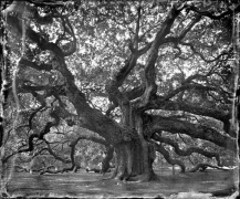 Angel Oak 2010