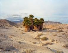 17 Palms Oasis, Anza Borrego, CA