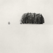 Michael Kenna, Copse and Tree, Mita, Hokkaido, Japan, 2007, gelatin silver print