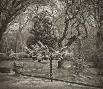 Tree, Giardino dei Semplici, Florence, from the series In the Garden, platinum print, 16 x 18 1/2 inches