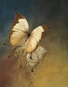 Nymphalidae: Charaxes, 2008