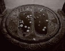 Buddha's Footprints, India, 1979,