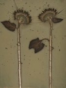 Sunflower 07-08, 2007