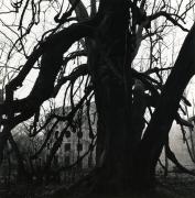 Le Desert de Retz, Study 13, France, 1988