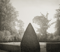 Yew, Hinton Ampner, from the series In the Garden, 2003